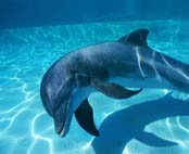 Earthcare Against New Captive Dolphin Facilities