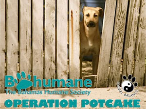 Greedy Local Vets Destroy Operation Potcake – Petition