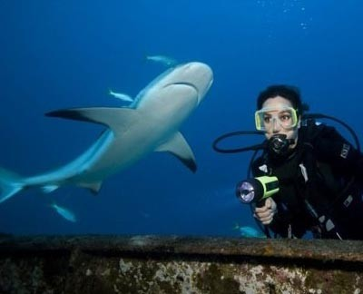 Strange Facts: Scuba divers observe interesting shark behavior in the Bahamas