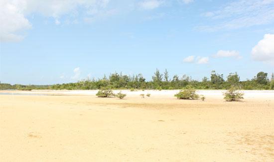 abaco-environmental-damage