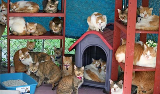 47 Cats: Bahamas Humane Society Pleas for Help