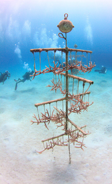 cervicornis-coral-nature-conservancy-image-ellison-gomez