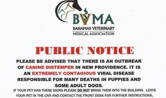 Distemper Outbreak Advisory