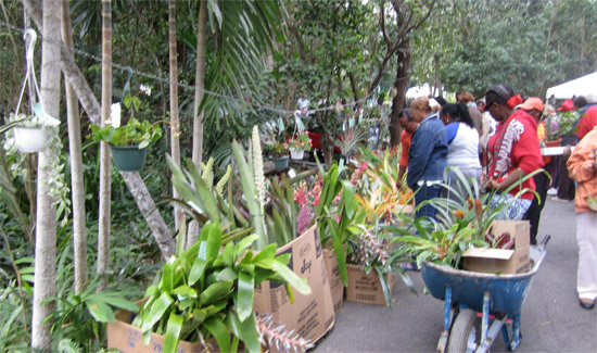 HSB Plant Sale Set For Feb 14