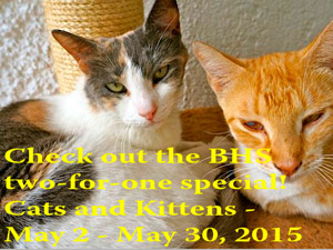 BHS Patio Sale, 2-Cat Special & Upcoming Events