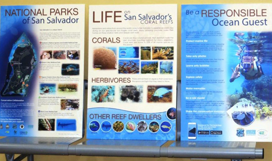 Exploring Marine Life In San Salvador Gets More Hands-On