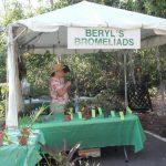 Beryl's Bromeliads