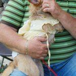 Lady Lap Dog