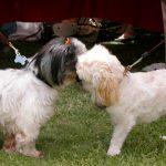 Canine Embrace