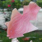 Conch Fish
