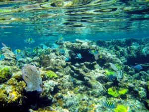 Report Shows Golf Courses Damage Coral Reefs