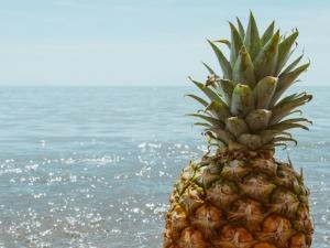 Summer Fruits of The Bahamas