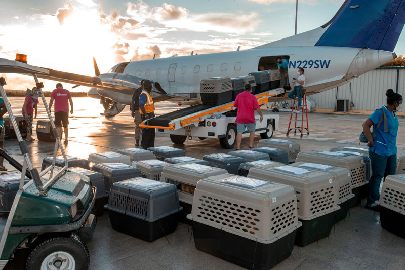 Bahamas to Michigan airlift